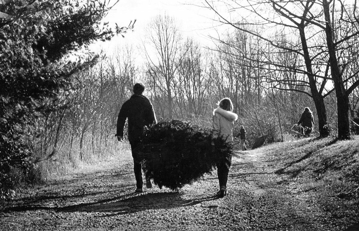 Preservation Maryland | Maryland's Oldest Christmas Tree Farms