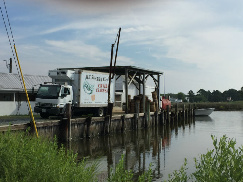 A common site of the seafood industry in Dorchester County.