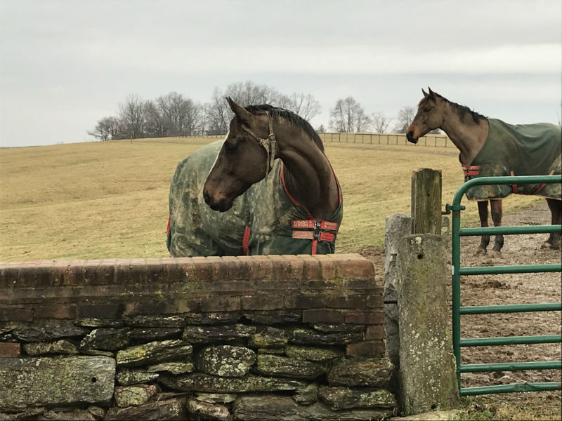 Horse and Hounds trail as part of Baltimore County