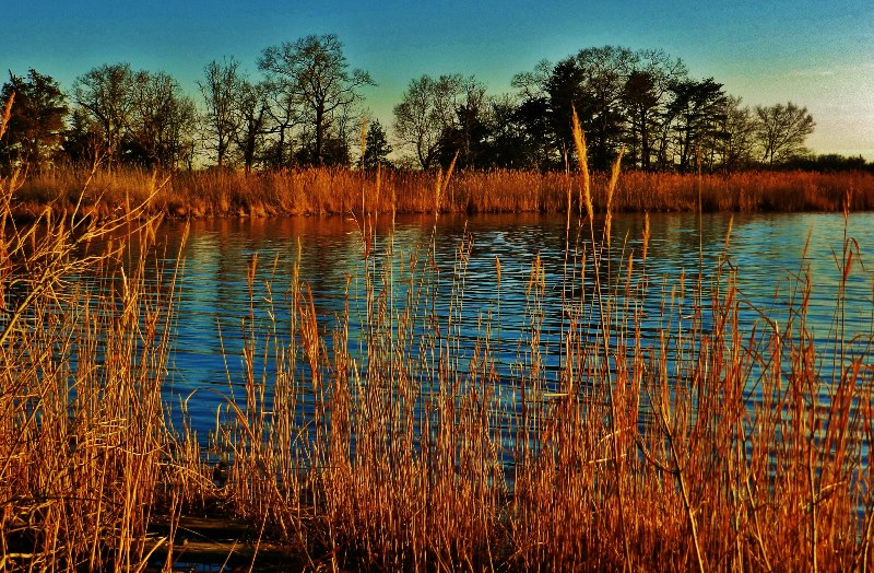 Forests are critical to the health of the Chesapeake Bay and act as an important filter.