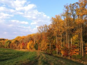 Fall foliage in Howard County. Suzanne Wright for Maryland DNR, 2014.
