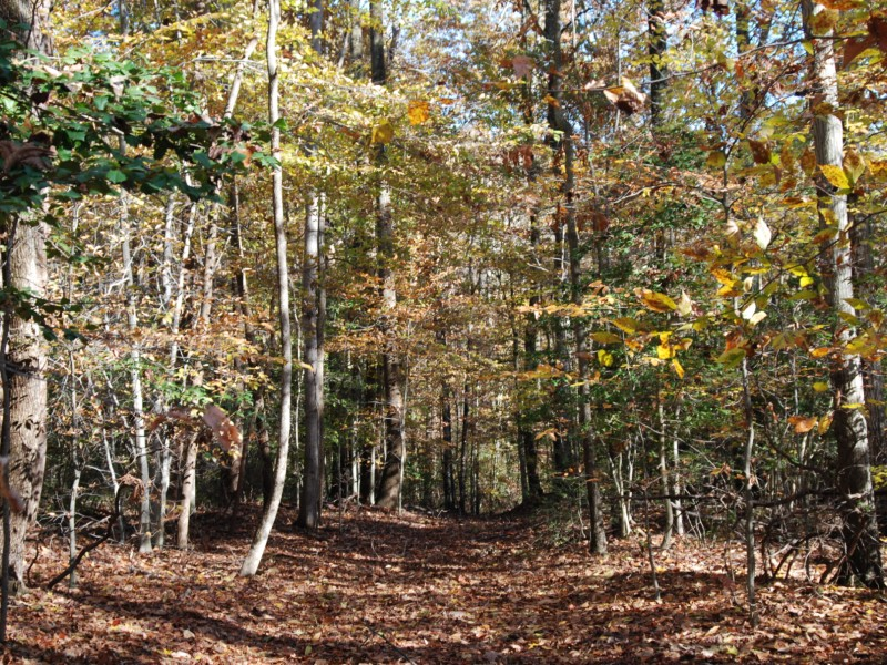 Forested land in Anne Arundel County. Photo from Maryland DNR.
