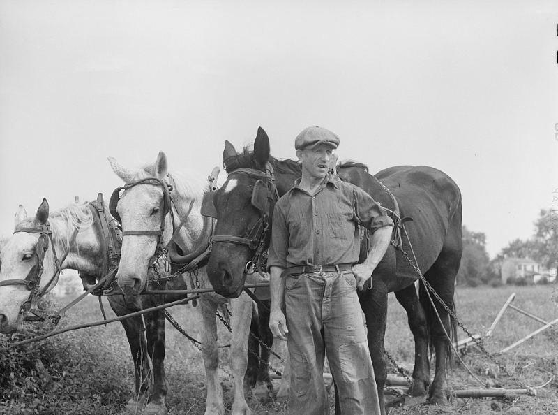 Farmer and team near Frederick, Maryland, 1940. Photo from the Library of Congress.