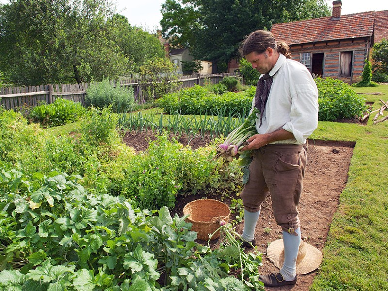 Garden at Old Salem, North Carolina, are growing need produce.